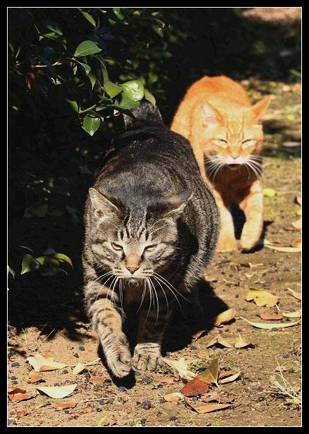 Коты (89.94КиБ)