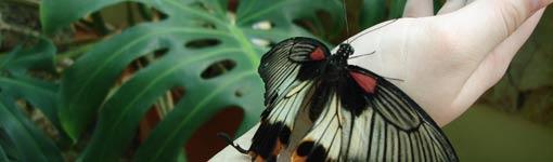 Выставка живых бабочек (12.79КиБ)