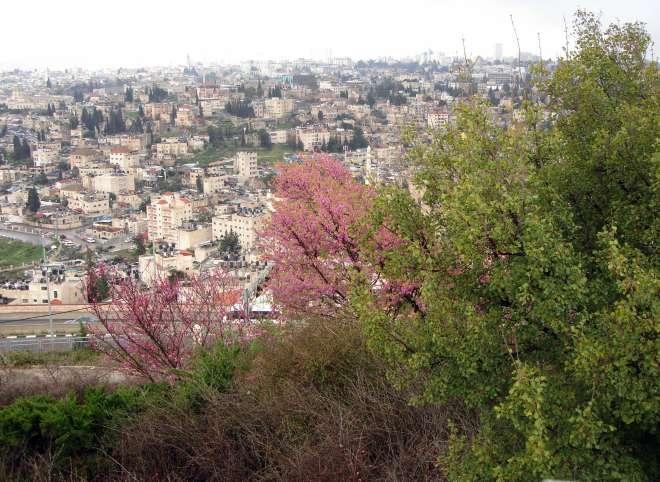 Иерусалим (59.16КиБ)